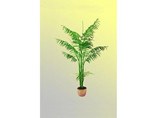 EUROPALMS Areca Palme 4 stämmig 240cm, Kunstpflanze