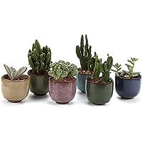T4U 6.5CM Pots En Céramique Crépiter Série/Plante Succulente/Plante en Pot/Cactus/Pot De Fleur/jardinière/Cultive 1 Paquet de 6