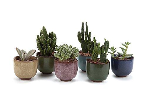 T4U 6.5CM set of 6 Ice Crack Zisha Raised SerialCeramica Vaso di Fiori Pianta Succulente Cactus Vaso di Fiori giardino i vasi di fiori vasi di piante.