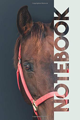 Notebook: Horse Bridle Vibrant Composition Book for equine therapy care por Molly Elodie Rose
