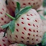 Lamdoo 100x seltene Erdbeere Berry Seed nahrhafte Früchte Pflanze frische Samen (weiß)