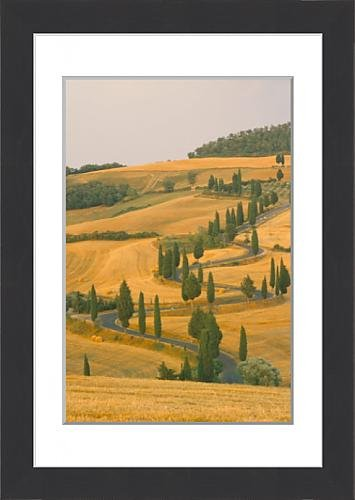 framed-print-of-cypress-trees-along-rural-road-near-pienza-val-d-orica-siena-province