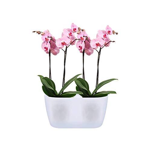 elho Bruxelles Orchidea Duo Vaso da Fiori, Trasparente, 25cm