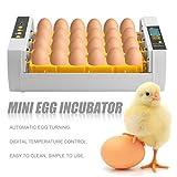 LasVogos Mini Incubatore Pratica 24 Uova di Alta capacità per la tornitura di Pollo Pollame Quaglia Turchia Uova di Uso della casa Uovo Automatico