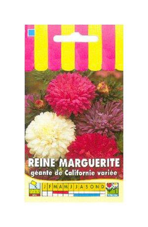Les Graines Bocquet - Graines De Reine Marguerite Géante De Californie Variée - Graines Potagères À Semer - Sachet De 0.8Grammes