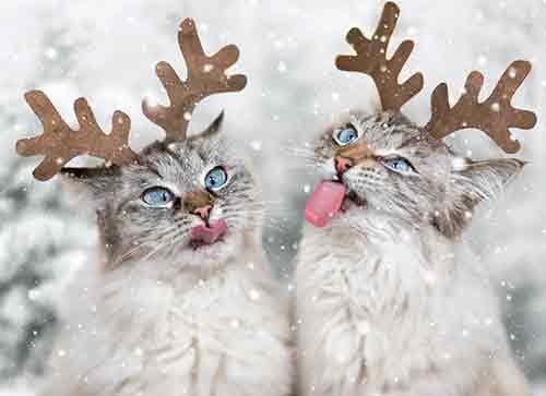 Glänzende Kostüm Das Gruppe - Avanti Press Avanti buy Weihnachtskarten, Rentier Katzen fangen Schneeflocken (701732)
