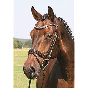 Hans Melzer Horse Equipment Trense Mechtersen, braun/messing, Vollblut