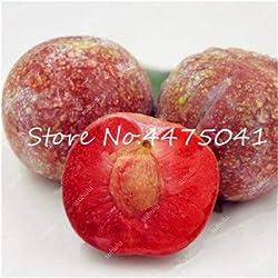 Pinkdose 10 Stück Rosaceae Prunus Cerasifera Bonsai Zierpflanze Kirschpflaume-Strauch-Baum, im Freien weit gezüchtete Myrobalan-Pflaumenfrucht: 1