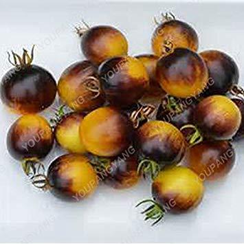 Vista 1 Packung 100 Samen/Pack Mehrjährige Tomate Riesige Bäume Im Freien Gewächshaus Verfügbar Heirloom Tomatensamen In Bonsai Schokolade