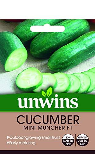 Unwins 30310569 Mini Muncher Graines de concombre Transparent