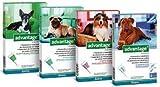Advantage 100pour chiens 4-10kg-4Pipettes...