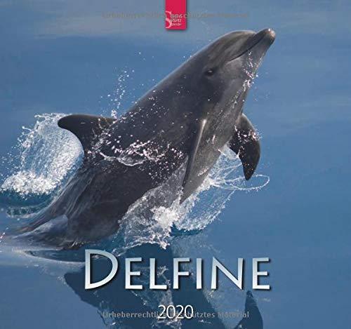 Delfine: Original Stürtz-Kalender 2020 - Mittelformat-Kalender 33 x 31 cm