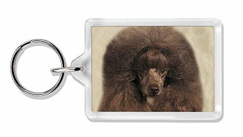 Schokoladen-Pudel- Hund Foto Schlüsselbund TierstrumpffüllerGeschenk (Pudel Wein)