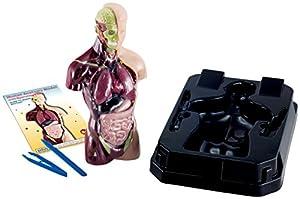 Eduscience - Modelo de anatomía Humana con órganos Suaves