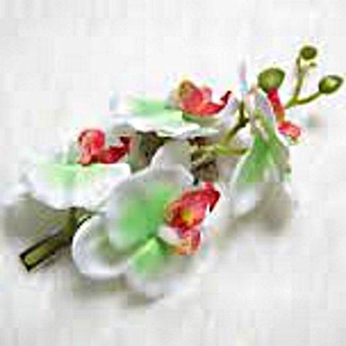Mariposa-Orqudea-pelo-Clip-Gran-pelo-flores-zeig-en-blanco--verde
