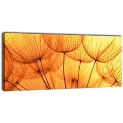 Leinwandbild Panorama Nr. 319 Pusteblume Orange 100x40cm, Keilrahmenbild, Bild auf Leinwand, Löwenzahn Blüte Schirmchen