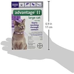 Bayer Advantage II mensuel Traitement Anti-Puces–Grande Chat–6CT