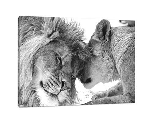 bestforhome - Leinwandbild Schönes bezauberndes kuschelndes Löwenpaar (Löwen) in Afrika in der Savanne! schwarz/weiß auf Leinwand, riesige Bilder fertig gerahmt mit Holzrahmen (120 x 80 cm) -