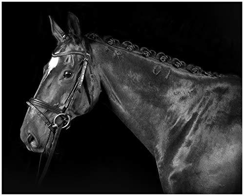Wallario Black and White Edition - Poster Herausgeputztes Pferd mit Geschirr in Premiumqualität, Größe: 40 x 50 cm