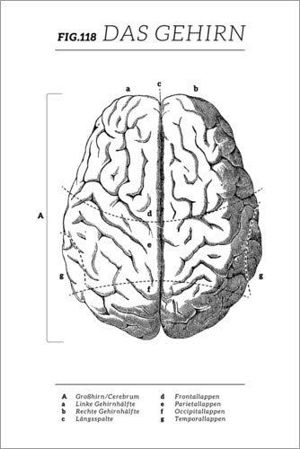 Posterlounge Alubild 40 x 60 cm: Das Gehirn Diagramm (Vintage) von Wunderkammer Collection/Editors Choice