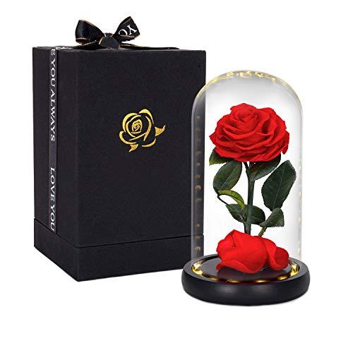 Hela Handgemacht Erhaltene Blumen Ewige Rose mit LED-Lichtern und Geschenkbox - 20CM (Die Schöne und das Biest Rose)
