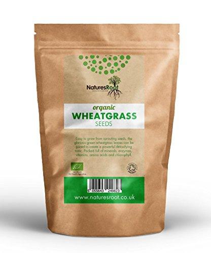 zengras Sprießen Samen 250g - Superfood | Nicht GVO | Microgreen Sprouts | Gartenpflanzen | Weizen Gras Entsaften | Katzengras ()
