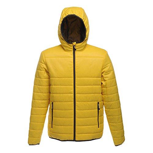 Regatta - Regatta Acadia Warmloft Down Touch Jacket, moderno Uomo Yellow (Bright Yellow)