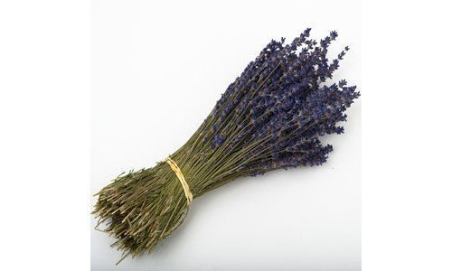 (LAVENDER BUNCH 250 STEMS DRIED FLOWERS 30CM WEDDING FAVOURS OR DECORATIONS by Kellys Wedding World)