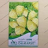 VISTARIC Heirloom Physalis alkekengi Semi lanterna cinese Giallo ciliegia della vescica Big Frutta, pacchetto originale, 250 Semi, alchechengi