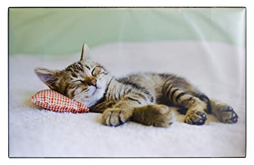 Idena 14016 - Schreibunterlage aus Kunststoff mit Zwei Einstecktaschen, Katze, ca. 68 x 44 cm, Mehrfarbig