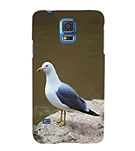 PrintVisa Cute Sweet Pigeon 3D Hard Polycarbonate Designer Back Case Cover for Samsung Galaxy S5 mini :: Samsung Galaxy S5 mini Duos :: Samsung Galaxy S5 mini Duos G80 0H/DS :: Samsung Galaxy S5 mini G800F G800A G800HQ G800H G800M G800R4 G800Y