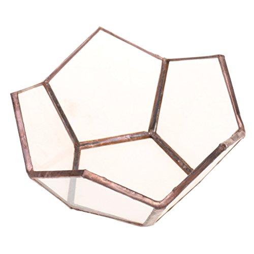 MagiDeal Offenes Geometrisches Glas Terrarium Box Glas Sukkulente Pflanzgefäß Deko Lotus Form