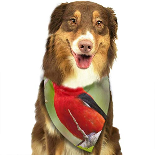 That's Also Good for The Birds Fashion Dog Bandana Pet Accessories Easy Wash Scarf ()