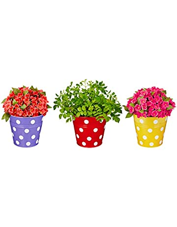 Hanging Planters: Buy Hanging Planters Online at Best Prices in