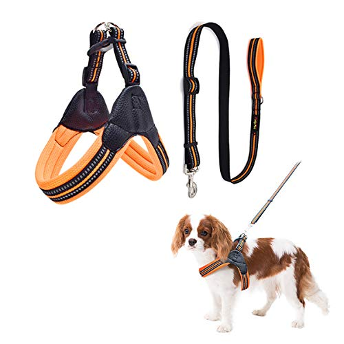 Namsan Hundegeschirr für Hunde mit Hundeleine Komfortabel Einstellbar Hundebrustgurt No Pull Hundegeschirr Set Dog Harness Perfekt für Tägliches Laufen, Spazieren, Training-XS (Orange)