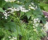 Bobby-Seeds Kräutersamen Aromata