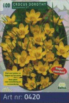 100 Krokusse Dorothy von Baltus Blumenzwiebeln - Du und dein Garten