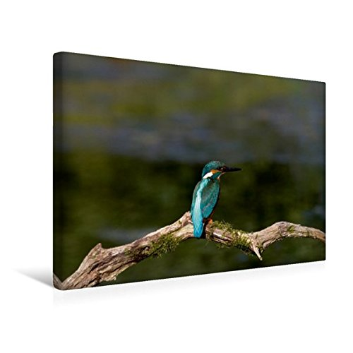 Calvendo Premium Textil-Leinwand 45 cm x 30 cm Quer, Europäischer Eisvogel | Wandbild, Bild auf Keilrahmen, Fertigbild auf Echter Leinwand, Leinwanddruck Tiere Tiere