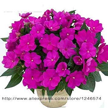 VISTARIC 13: Big Pots de fleurs jardiniÚres, 20 types, 50 PCS/Lot, rose graines arc-en-Belle rose graines bonsaïs graines, 13 B4LT8H