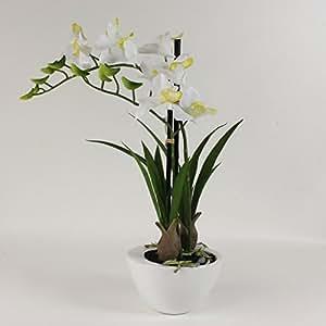 ORCHIDEE di Dendrobium Bianco in guscio bianco 40cm