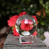 Neewer® 80mm/3 Zoll Klare Kristallkugel Globus mit kostenlosem Kristall Ständer für Feng Shui/ Wahrsagung oder Hochzeit/Hause/Büro Dekoration