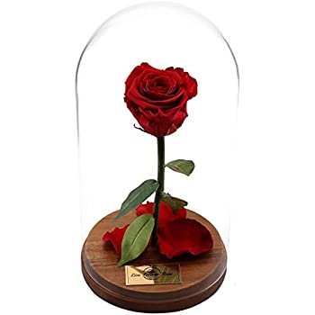 Beauty And The Beast Rose Live Forever Rose In Glass