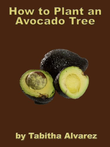 how-to-plant-an-avocado-tree