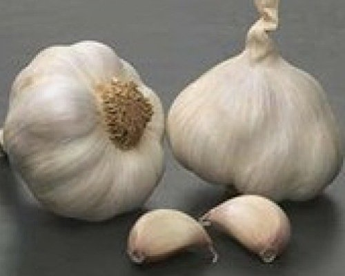 """Garlic seeds /""""Solent Wight/"""" 100 cloves"""
