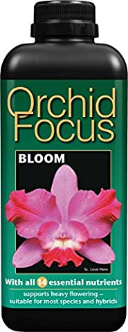 Orchid Focus Bloom 1