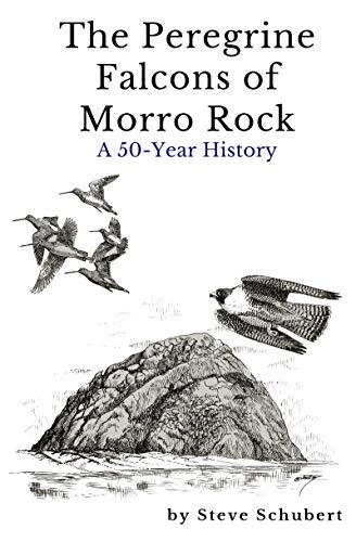 The Peregrine Falcons Of Morro Rock: A 50-Year History  1967-2017 (English Edition) -