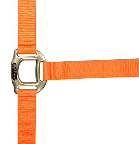 Equi-Theme/Equit\'M Unisex\'s Halfter Éclat, Neon Orange, One Size, 510080025