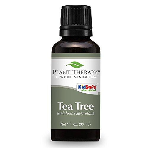 plant-therapy-tea-tree-essential-oil-puro-al-100-non-diluito-grado-terapeutico-30-ml