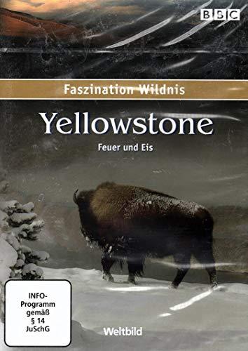 BBC Faszination Wildnis: Yellowstone - Feuer und Eis
