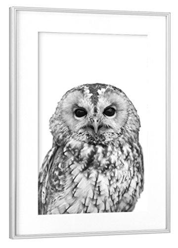 Rahmen Silber 45x30 cm Black and White Owl von Lexie Greer - gerahmtes Poster ()